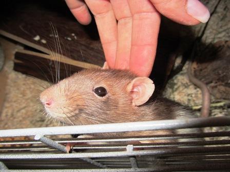 """Armer Rattenbub """"Freddy"""" ist auf eine Pflegestelle gezogen :-)"""