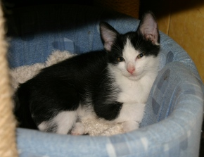 Juhu Vermittelt : Katzenbaby Celia