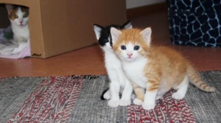Zwei Katzenbrüder haben gemeinsames Zuhause gefunden