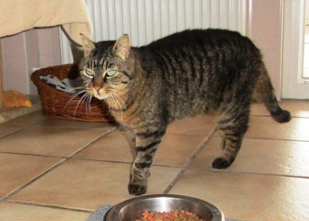 entlaufene Katze Mayla ist wieder zurück