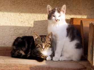 Auswilderungsstellen für Katzen gesucht!