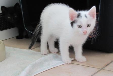 """""""Sammy""""- mutiges Katzenkind"""