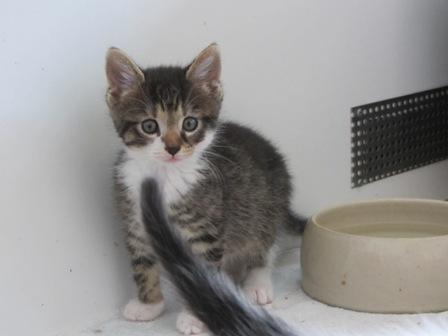 """Katzenbaby """"Tom"""" -kleiner Angsthase"""