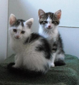 Katzenbabys Dolores, Deive und Aramis sind vermittelt :-)