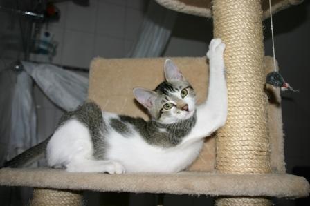 """Katzenbub """"Willi"""" ist so neugierig auf die große Welt"""