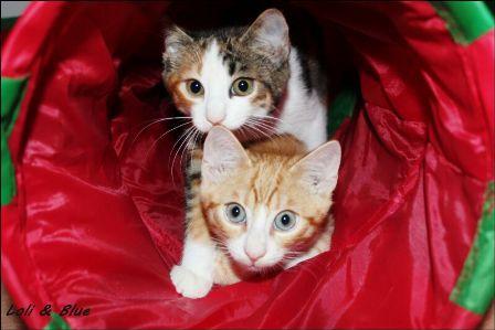Noch mehr Katzenkinder