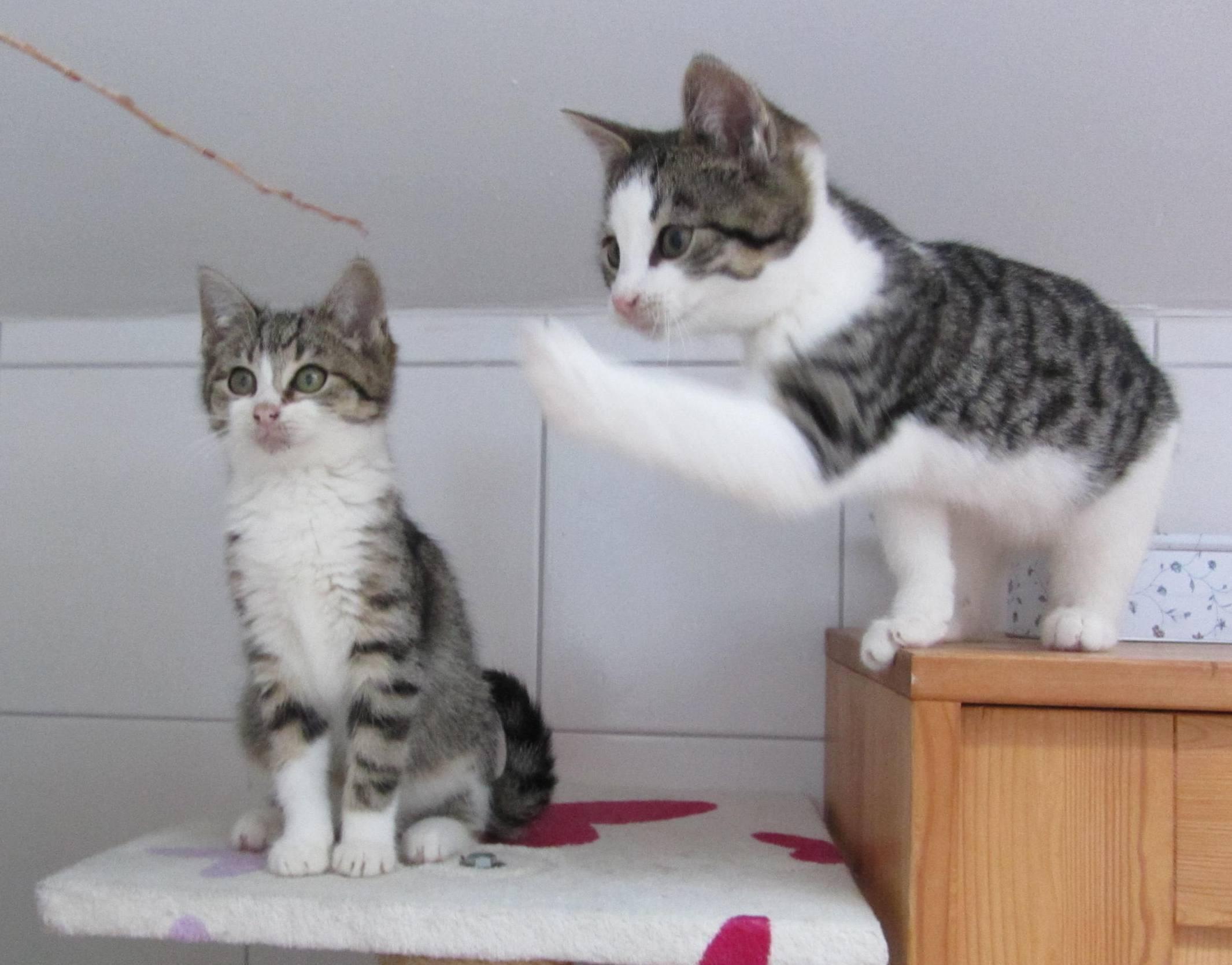 Tina und Tonio- Geschwister dürfen zusammen bleiben