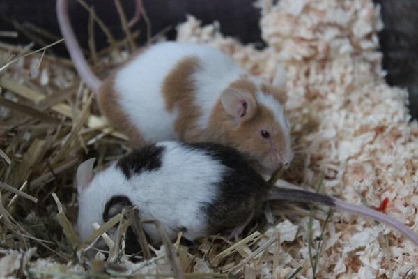 Nils und Holger haben ihr Traumzuhause!