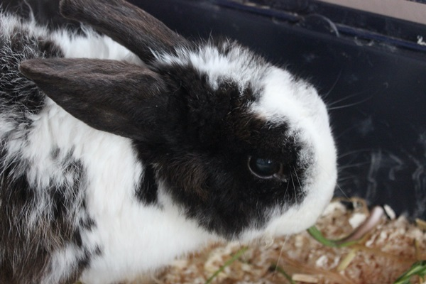 Bunny – Rekordverdächtig