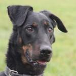 Zeus (8)