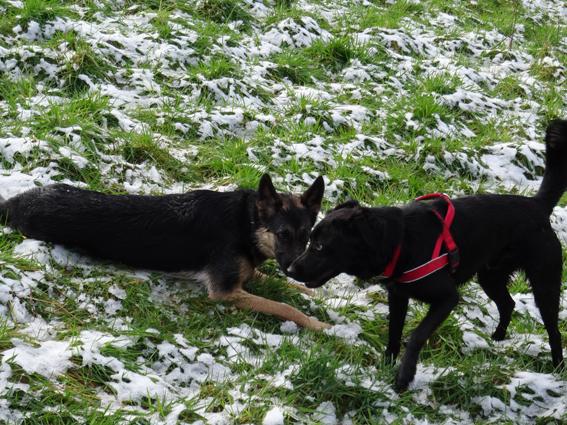Zwei Verrückte im Schnee…
