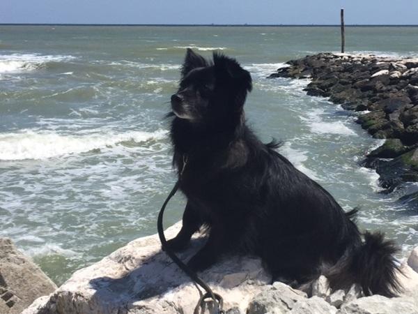 Wolfi – am Meer, Wolfi  will mehr