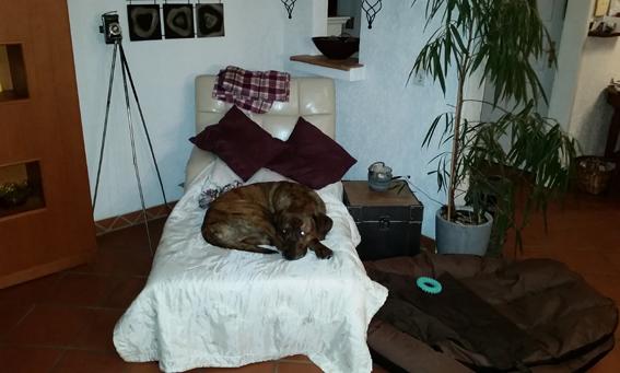 Lagebericht von Doggy :-)