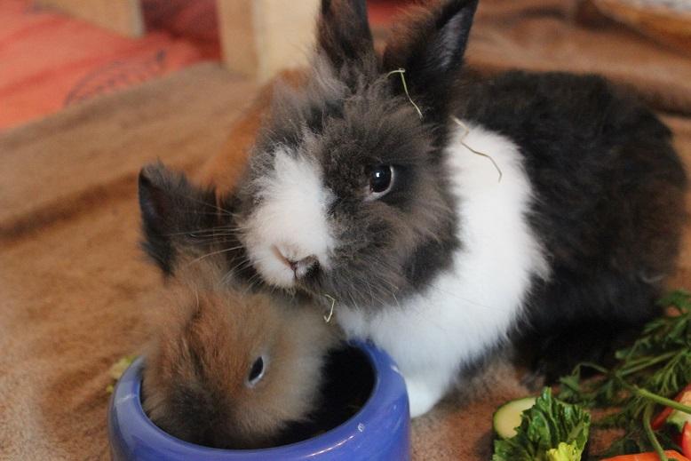 Oreo und Daisy durfte zusammen ausziehen!