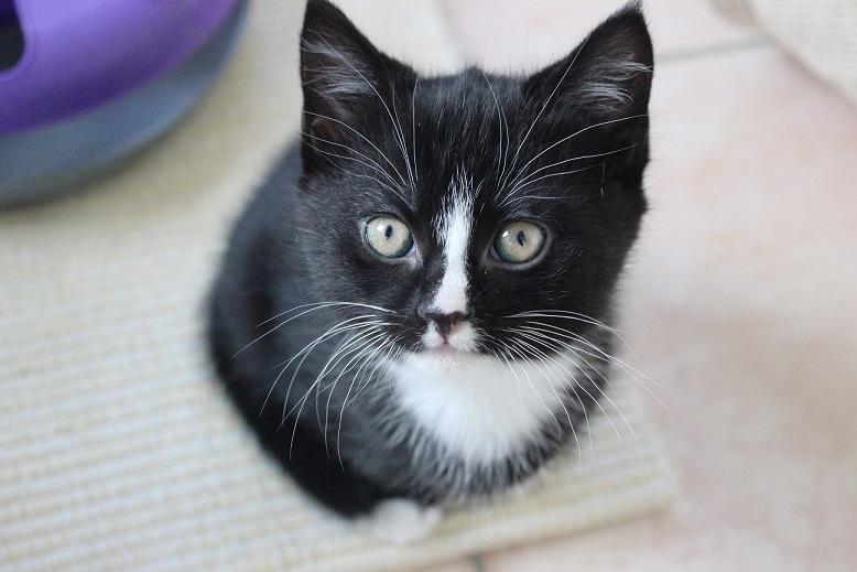 Ist Eure Katze schon kastriert?
