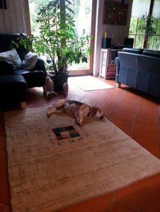 Auf dem Teppich liege ich auch sehr gerne