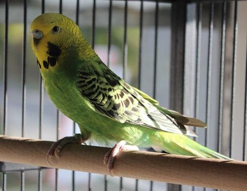 Cherry und Hansi – wir haben gleich zwei Vögel