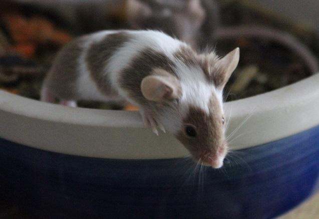 Macht`s gut, Mäuse!