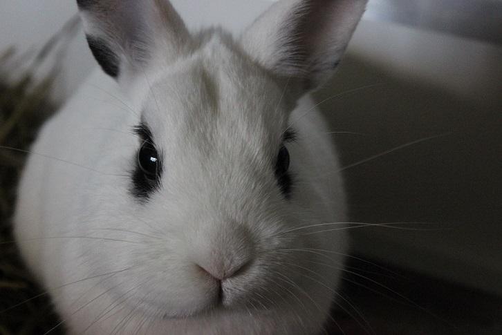Casper ist umgezogen!
