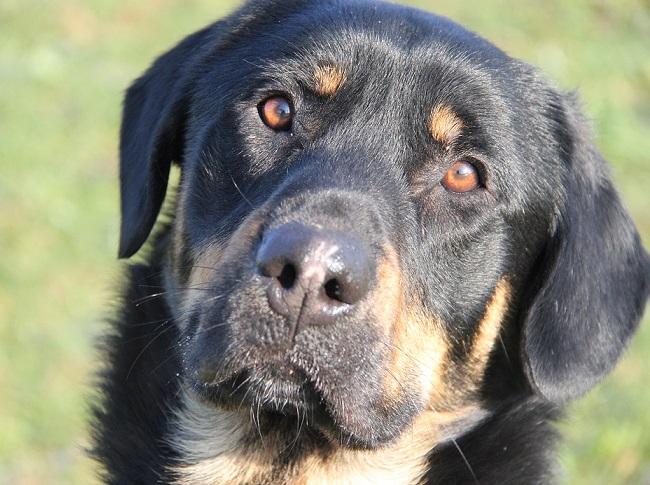 Helios – Traumhund mit Handicap