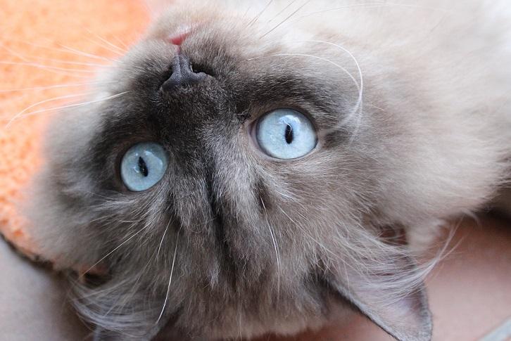 Heute ist Weltkatzentag!
