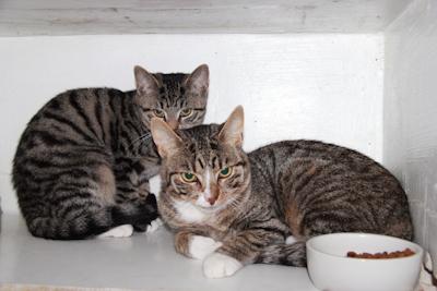 Figaro und Cleo – gefunden