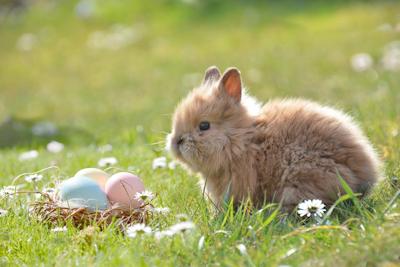 Gassizeiten über Ostern