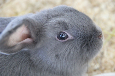 Barney, Bruce, Bunny und Bea – Zuckersüß