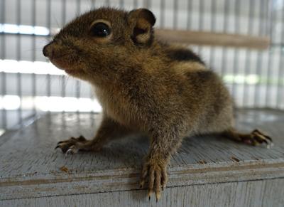Bilbo, Bommel, Bugs und Bogart – die Hörnchen sind los!